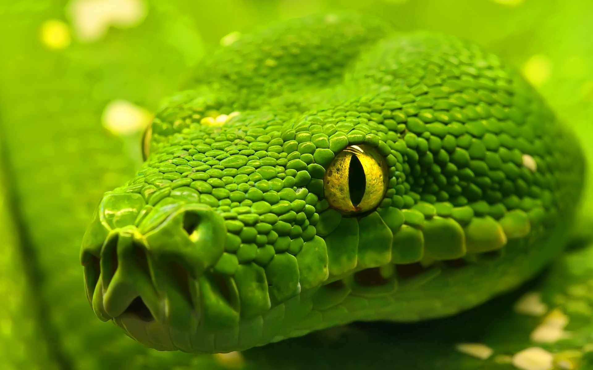 green-anaconda-widescreen-wallpapers-free-download-best-desktop-background-wallpapers-of-anaconda